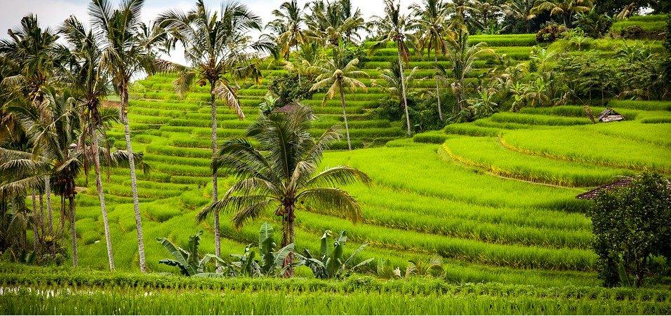 物联网可以通过什么方式影响农业