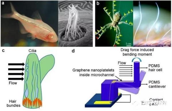 3D打印传感器将有可能成为无缝物联网的关键因素