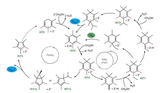 分子筛催化积碳跨笼生长机制新进展