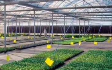 物联网技术在花卉种植业中有着什么运用