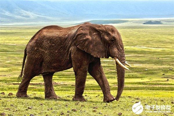 国外研究显示全球有超过2000个可再生能源设施威胁着动植物物种的自然栖息地