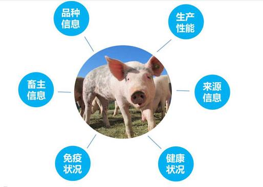 rfid技术在养猪行业有什么用处