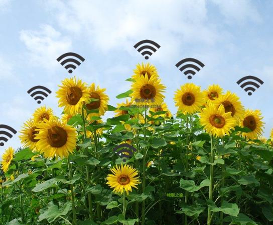物联网解决方案在农业监测系统中的应用解析