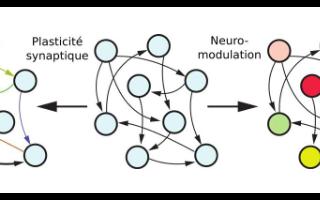 一种因受人脑功能而启发的新型人工智能