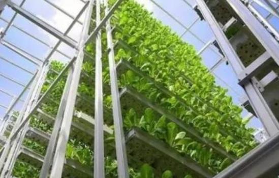 垂直农场在美国新墨西哥州兴起 受控室内环境可使农民全年生产新鲜食物