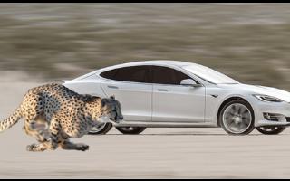 特斯拉新版弹射起步功能提升车辆性能
