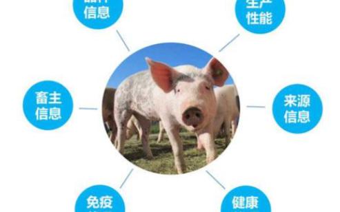 RFID技术神通广大,在养猪业也有技术应用
