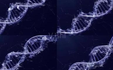 PCR儀是可控制循環反cong)ying)中(zhong)每一步(bu)的時間和溫度的可編程裝置