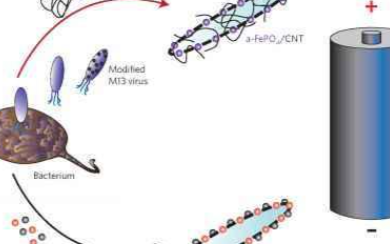 新突破性材料可将细菌转化为电池或传感器
