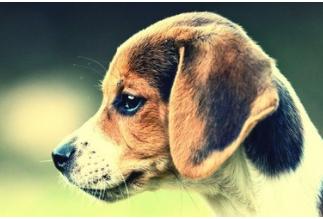 动物面部识别具有怎样的发展价值和潜力