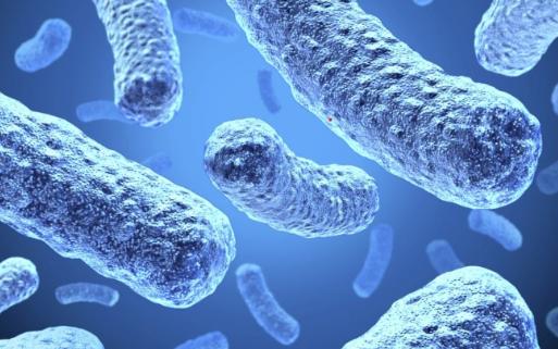 生物混合电池能从电细菌中获取能量