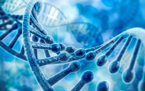生物材料发现了可实现3D打印组织样的血管结构