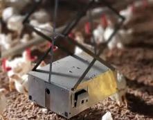机器人进入家禽农场,可改善动物福利提高生产效率