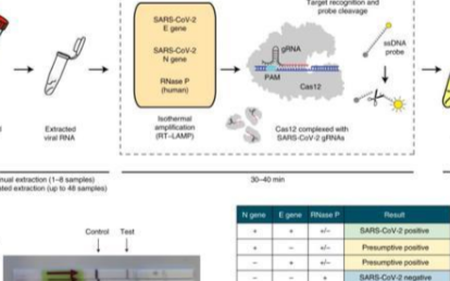 CRISPR超越熒光PCR,檢測新冠速度快9倍