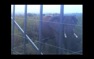 奧普士的智能激光雷達入選肯尼亞山國家公園大象保護項目