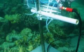 用AI对珊瑚礁的恢复能力进行监测、描述和分析