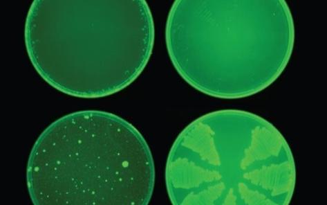 尋找新冠病毒有效藥物,AI會成為我們的救星嗎