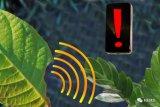 一种新方法来追踪植物对压力源的反应