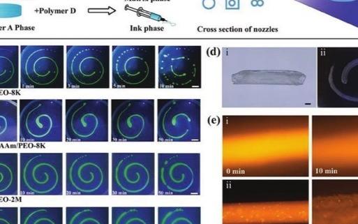 深大醫學院研發出了再生醫學的生物3D打印技術