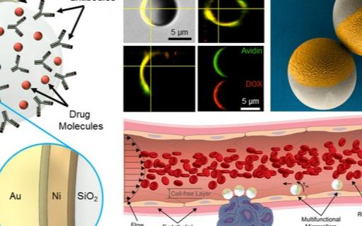 全新微型机器人可在血液中输送药物,灵感来自白细胞
