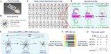 廈門大學研發出全新高通量單細胞轉錄組測序方法