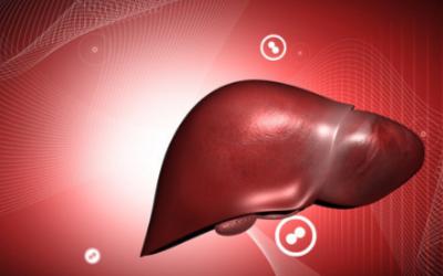 巴西科学家3D打印微型肝脏,其功能可用