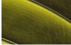 鏂板瀷绱у噾鍨嬭秴鐏垫晱纾佸姏璁$爺鍙戞垚鍔燂紝姣斾紶缁熼湇灏旀晥搴斾紶鎰熷櫒楂?20鍊?
