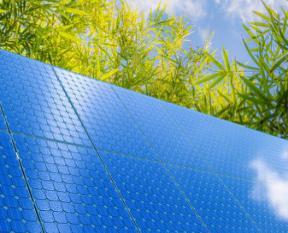 叶绿素生物太阳能电池研发成功,在未来5至10年进入关键期
