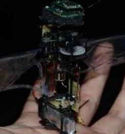 会飞的机器人KUBeetle-S,通过改变翅膀的...