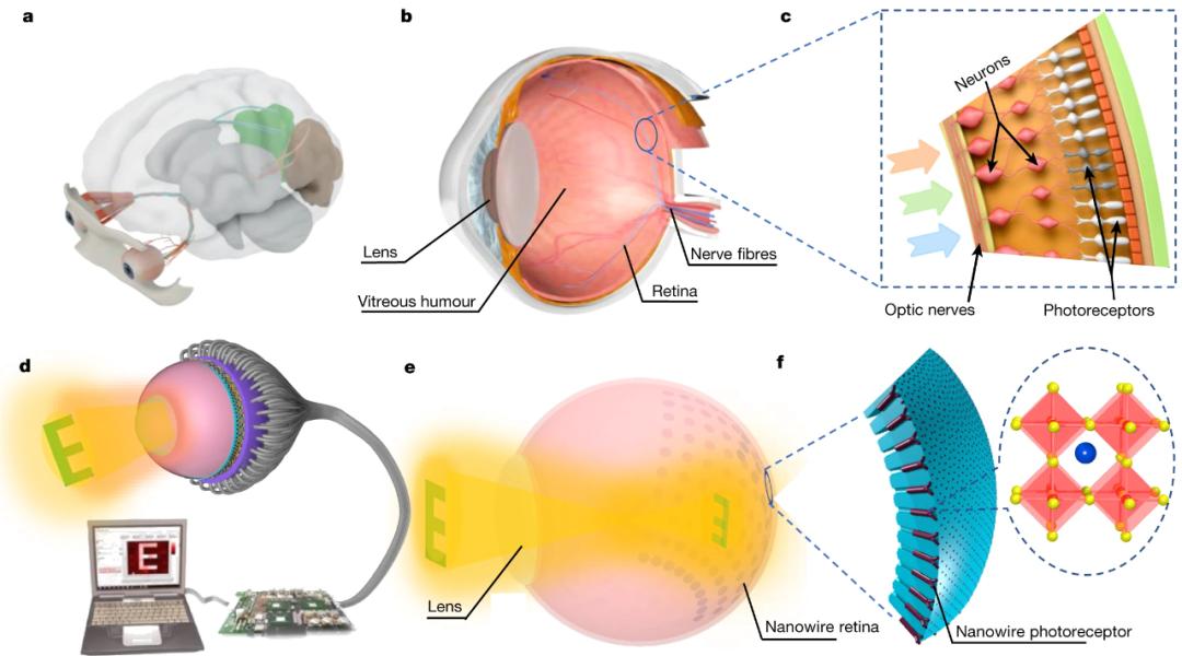 人造眼图像的感应过程