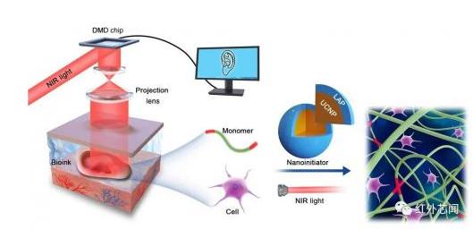 基于数字近红外光聚合3D打印:可实现无创体内3D生物打印?