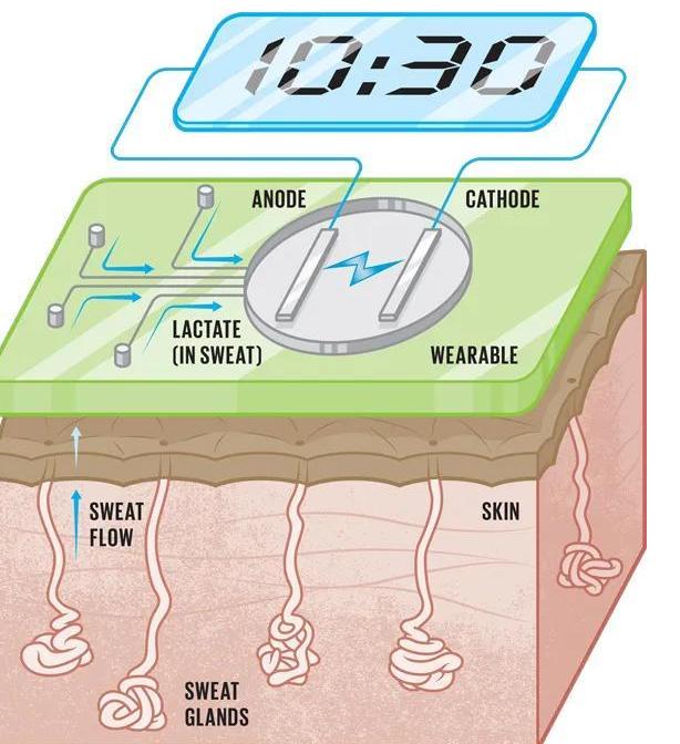 出汗也可以为可穿戴设备供电方式