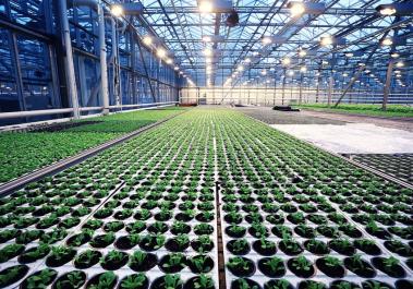 CO2传感器在温室农业和垂直农业中的应用案例解析