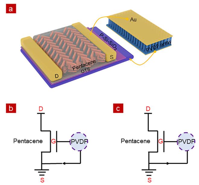 基于并五苯有机场效应晶体管和PVDF纳米棒阵列的压电式触觉传感器
