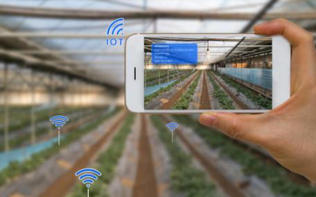 智慧农业系统中温室大棚智能控制的蔬菜喜获丰收
