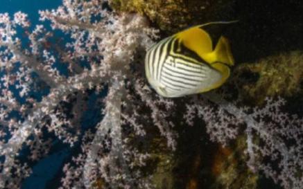 以珊瑚蟲為原型的水中作業機器人開發