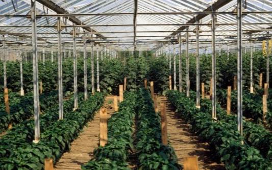 具備自動控制的智能系統已成為了大棚種植的潮流
