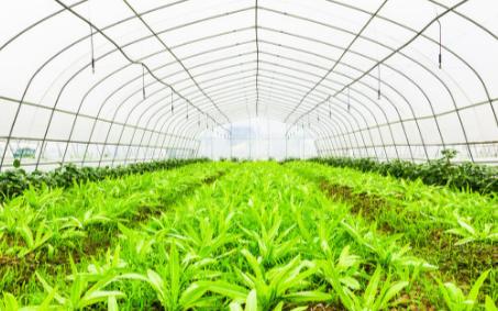 智能温室大棚与传统温室大棚的区别是什么