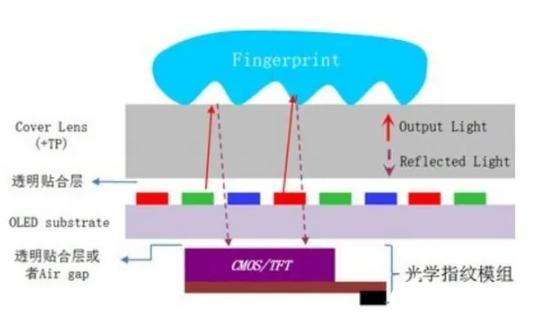 解析市场上的指纹识别技术