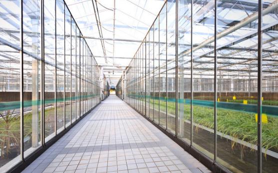 """""""智能温室控制系统""""将会是未来农业种植的发展趋势"""