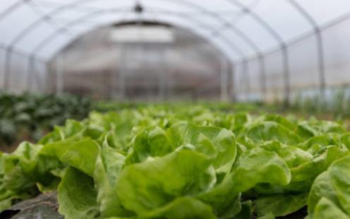 智能化大棚温湿度控制系统可保证种苗的生长环境