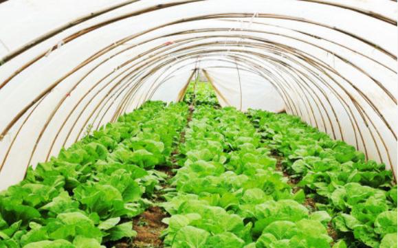 智能温室控制系统将助力智慧农业的快速发展
