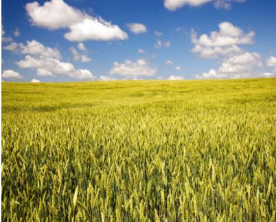 二氧化碳传感器在温室农业和垂直农业的异同和作用