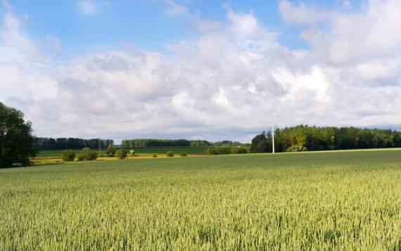 农业领域智能大棚控制系统的应用,助力蔬菜大丰收