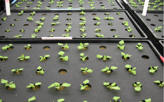 智慧农业应用中温室大棚自动控制系统的优势分析