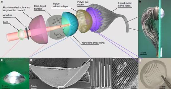 中国科学家研发新型纳米线球形仿生眼,获得广泛认可