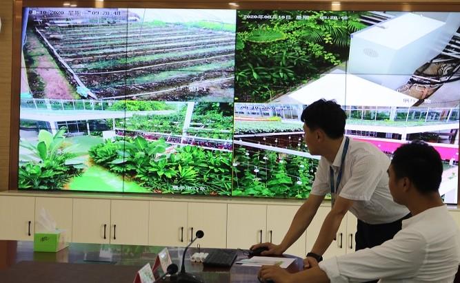 """连云港市浦南镇积极实施""""互联网+""""现代农业行动"""