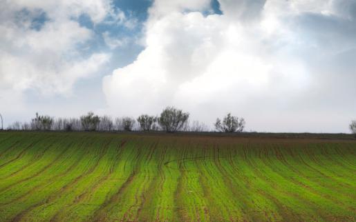 智能温室控制系统扶贫显成效,大棚蔬菜迎丰收