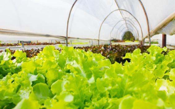 关于智能农业中温湿度监控系统的特点以及原理分析