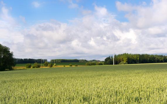 智能大棚控制系统将可以大大提高农作物的种植效率